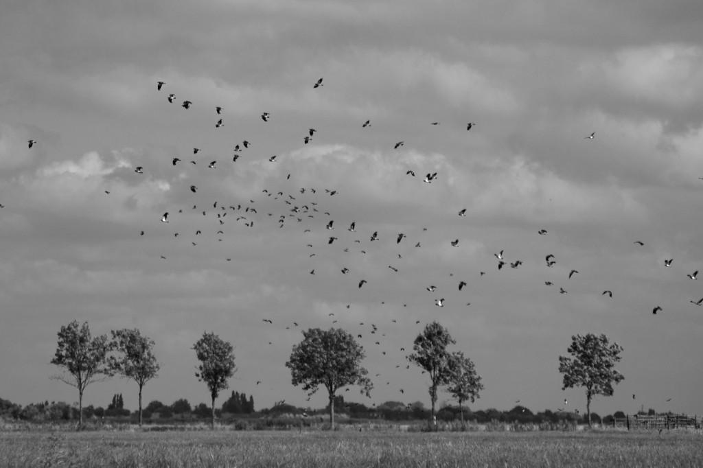 Esther Wagensveld - natuurfotografie